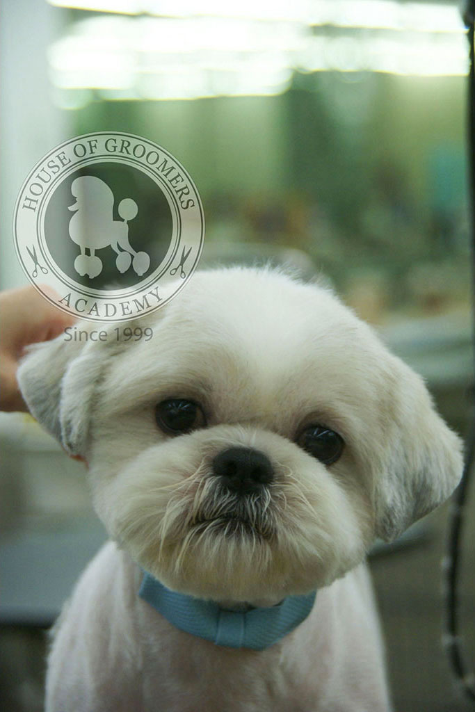 gallery6_petsalon