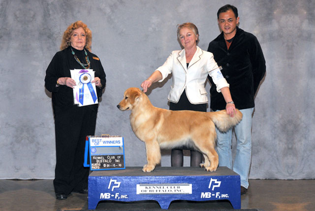 Mr. Gan's show-groom a Golden and won at Hamburg Kennel Club, Buffalo, New York