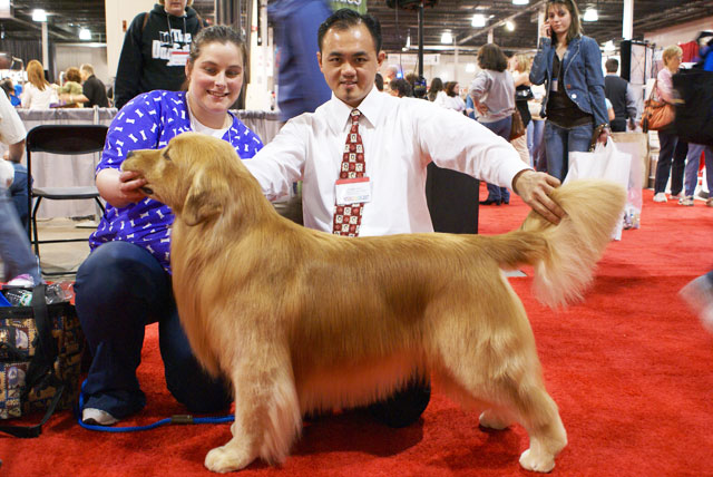 Mr. Gan Wee Yet judging a Golden Retriever at Integroom, New York