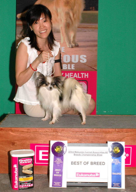 Ms Annie winning Best of Breed at an International Show with Top Champion Papillon 05